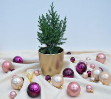 Brad mic în vas decorativ de Crăciun