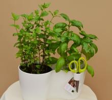 Mască dublă pentru ghivece cu plante aromatice