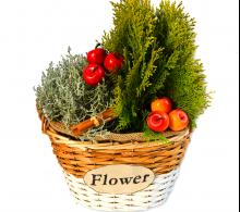 Aranjament cu plante de exterior si accesorii