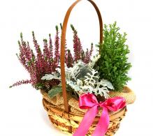 Aranjament in cos cu plante colorate
