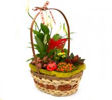 Cos cu plante de interior in culori vesele