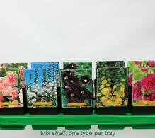 Comanda Nalba de gradina (Alcea rosea) -flori de vanzare, pret special