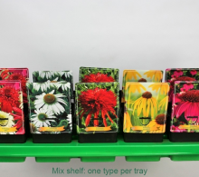 Comanda Echinaceea, margarete colorate ornamentale (Echinaceea mix),  de vanzare la pret mic