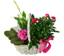 Comanda Aranjament flori 8 martie - Cos cu flori pastelate