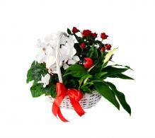 Comanda cos cadou cu flori rosii si albe - Cadouri  1 - 8 Martie