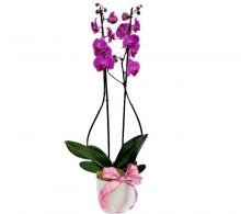 Aranjament orhidee Phalaenopsis cu ghiveci decorativ