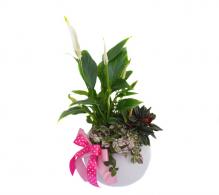 Comanda Aranajament cu plante purificatoare de aer
