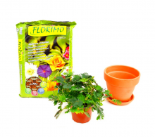 Kit de ingrijire Mimoza - comnada online