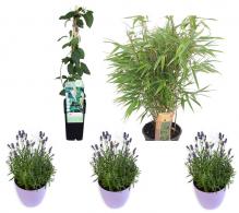 Pachet plante - Gradina de relaxare