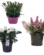 Pachet flori pentru stancarie