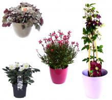 Pachet plante de gradina pentru semiumbra
