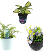 Pachet plante de gradina rezistente la umbra deasa