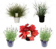 Pachet plante - Gradina mediteraneana